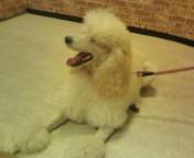 松川修也 公式ブログ/LOVE&DOG 画像1