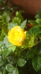 松川修也 公式ブログ/おはようございます(*´∀`)♪ 画像1