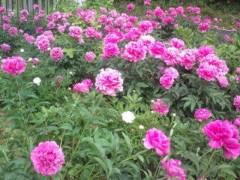 松川修也 公式ブログ/近所の公園 画像1