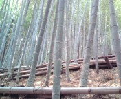 松川修也 公式ブログ/うちの筍山です 画像1