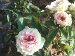 松川修也 公式ブログ/庭の新しい仲間3 画像1