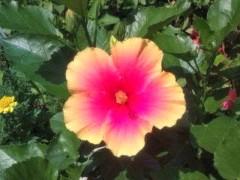 松川修也 公式ブログ/夏の花 画像1
