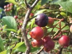 松川修也 公式ブログ/収穫の時期 画像1