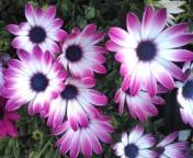 松川修也 公式ブログ/春の庭� 画像1