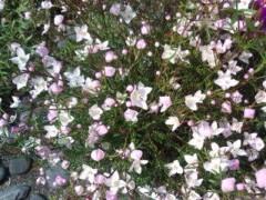 松川修也 公式ブログ/庭の花畑 画像1