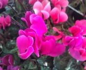 松川修也 公式ブログ/秋の庭に 画像1