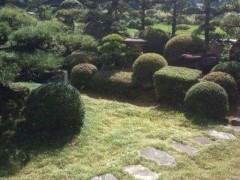 松川修也 公式ブログ/庭木もスッキリ 画像1