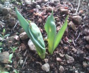 松川修也 公式ブログ/植物の力 画像1