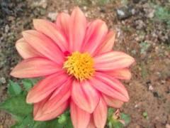 松川修也 公式ブログ/新しい庭仲間 画像1