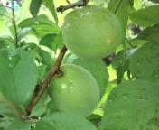 松川修也 公式ブログ/梅雨の庭2 画像1