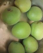 松川修也 公式ブログ/梅の収穫 画像1