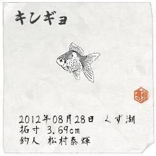 松川修也 公式ブログ/久々の釣り☆スタ金魚が釣れたので初めての釣りブログ 画像1