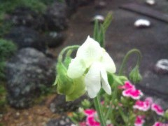 松川修也 公式ブログ/やっと咲き始めて 画像1
