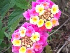 松川修也 公式ブログ/可愛い花 画像1