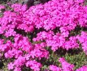 松川修也 公式ブログ/ピンクの絨毯 画像1