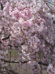 松川修也 公式ブログ/散る前に 画像1