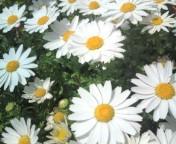 松川修也 公式ブログ/春の庭 画像1