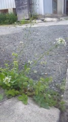 稲富菜穂 公式ブログ/春うらら 画像1