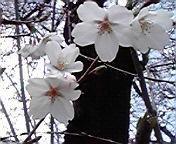 川上裕希 公式ブログ/いらっしゃい。 画像1