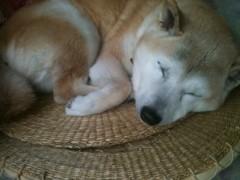 M.Rosemary 公式ブログ/寝てる動物って 画像1