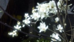M.Rosemary 公式ブログ/花の大きさが… 画像1