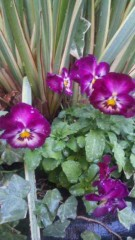 M.Rosemary 公式ブログ/お花さんたち 画像3