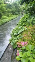 M.Rosemary 公式ブログ/植物たち 画像1