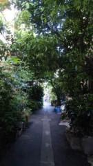 M.Rosemary 公式ブログ/緑のトンネル 画像1
