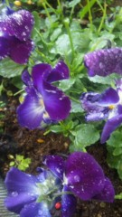 M.Rosemary 公式ブログ/お花さんたち 画像1