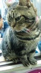 M.Rosemary 公式ブログ/クリーニング屋さんの癒し猫 画像1
