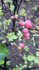 M.Rosemary 公式ブログ/雨の中で 画像1
