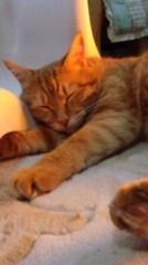 M.Rosemary 公式ブログ/ねこが寝てるとき 画像1