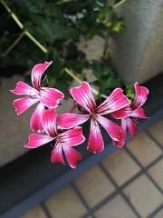 M.Rosemary 公式ブログ/昭和を築き支えた人たちが次々と 画像1