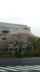 M.Rosemary 公式ブログ/はじめて会った桜 画像1