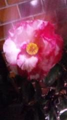M.Rosemary 公式ブログ/椿ちゃん 画像1