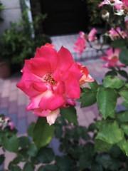 M.Rosemary 公式ブログ/新小結、#遠藤  から学んだこと 画像1