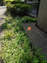 M.Rosemary 公式ブログ/関東の地に穴が開いて邪気が!? 画像1