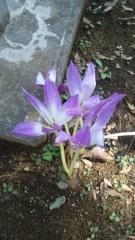 M.Rosemary 公式ブログ/なんという花? 画像1