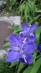 M.Rosemary 公式ブログ/秘密の花園 画像1