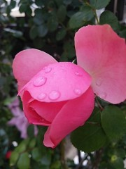 M.Rosemary 公式ブログ/花は、生まれる前から、名前が付いてる 画像2