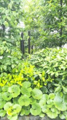 M.Rosemary 公式ブログ/緑がきれい 画像1