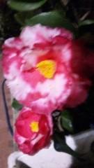 M.Rosemary 公式ブログ/うまく色が 画像1