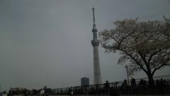 M.Rosemary 公式ブログ/桜とスカイツリー 画像1