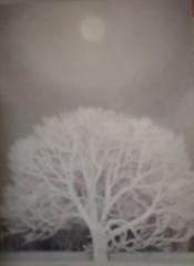 M.Rosemary 公式ブログ/東山魁夷展 画像3