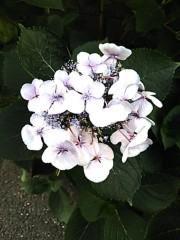 M.Rosemary 公式ブログ/「13の月の暦」では今日は水晶トリプル!!! 画像1
