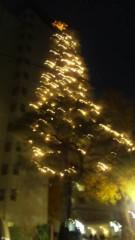 M.Rosemary 公式ブログ/クリスマスツリー 画像1