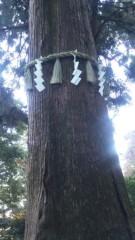 M.Rosemary 公式ブログ/東京のパワースポット/高尾山はスゴイ樹がいっぱい 画像1
