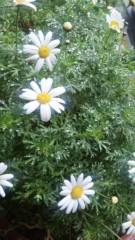 M.Rosemary 公式ブログ/マーガレットのメッセージ 画像1
