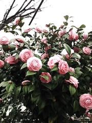M.Rosemary 公式ブログ/「そだねー」商標登録?! 画像1