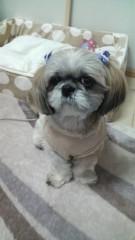 M.Rosemary 公式ブログ/シーズーのチキちゃん 画像1